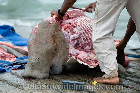Butchering-a-dugong
