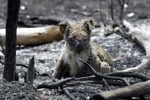 Burnt_wildlife
